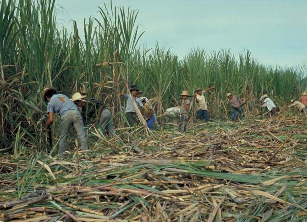 Denuncian que importación de azúcar ha generado caídas en las ventas de los nacionales
