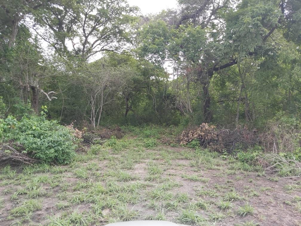 GNB localiza pista ilegal en municipio Ortiz del estado Guárico