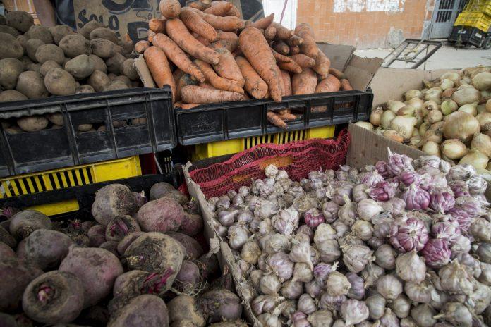 Producción de hortalizas en el país se ubica en 15 %