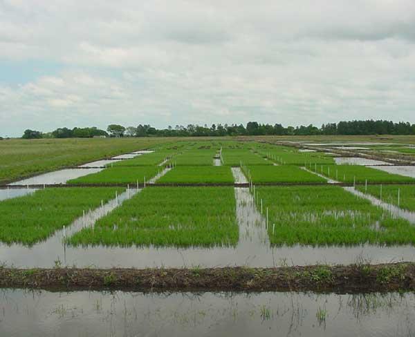 Deterioro del sistema de riego compromete la producción agrícola