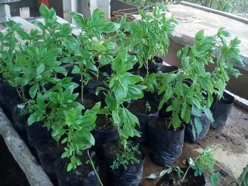 Unerg promueve el uso de plantas medicinales como alternativa para el cuidado de la salud