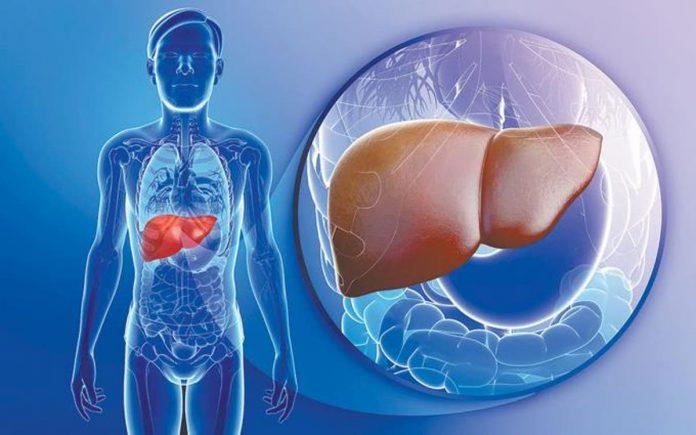 Importancia del hígado para el organismo